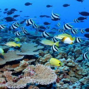 giftun-island-snorkeling
