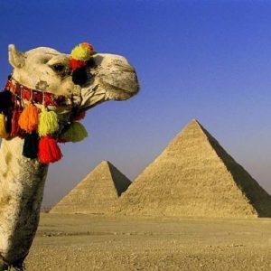 las-pirmides-y-camello-en-guiza-en-egipto